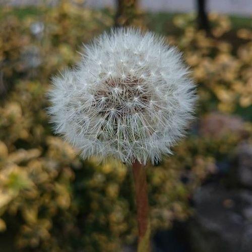 Autumn October Flower Colors garden piece nofilter dandelion