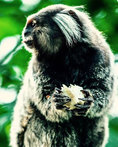 One Animal Animal Themes Animal Wildlife Outdoors Nature No People Close-up Animals In The Wild Beauty In Nature Nature Monkeylife