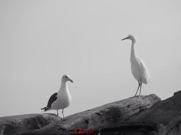 Birdwatching Bird Photography Eye4black&white  EyeEm Best Shots - Black + White Getting Inspired Taking Photos EyeEm Birds