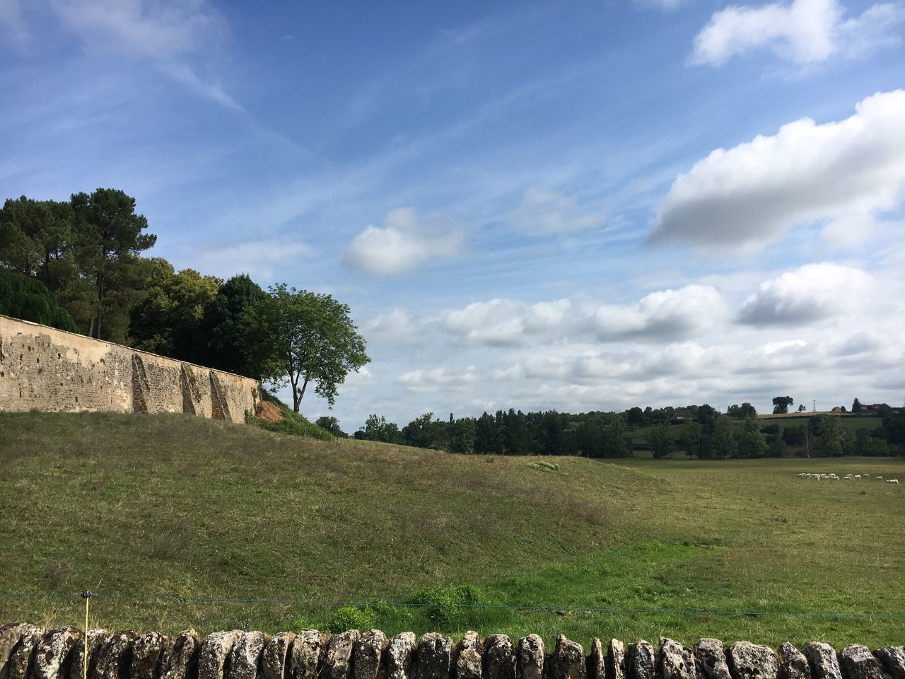 Trees On Grassy Field Against Blue Sky