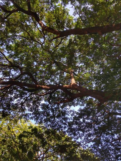 Tree Low Angle View Nature Animal Themes One Animal Animals In The Wild Branch No People Day Animal Wildlife Outdoors Growth Bird Beauty In Nature Mammal Colombia ♥