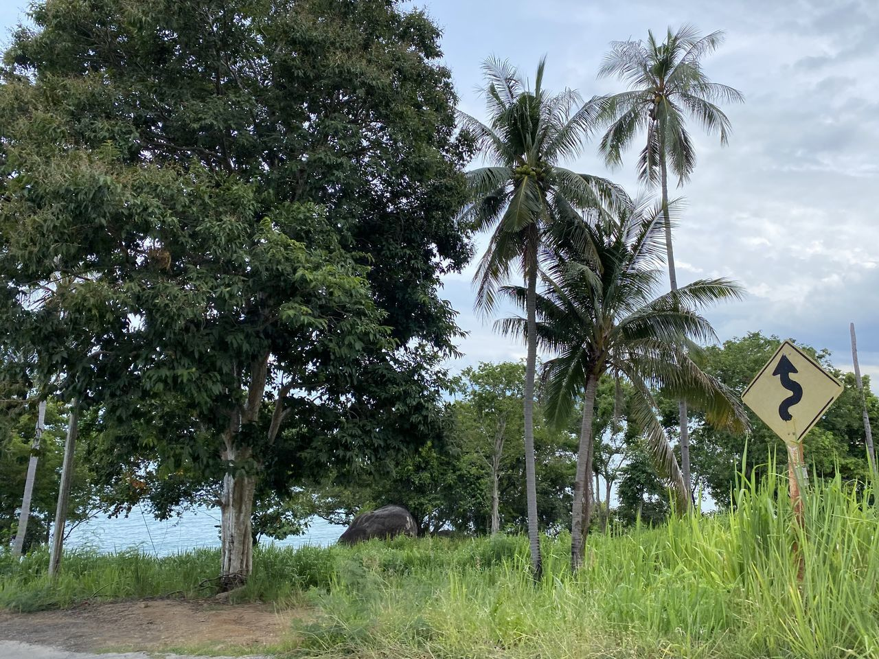 VIEW OF PALM TREES AND PLANTS ON ROAD