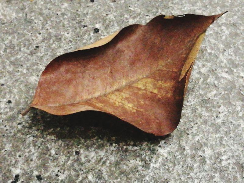 ใบไม้ร่วง ใบไม้ Leaf Leaf 🍂 Leafs Photography Leafs 🍃 Leafporn No People Close-up Indoors  Day