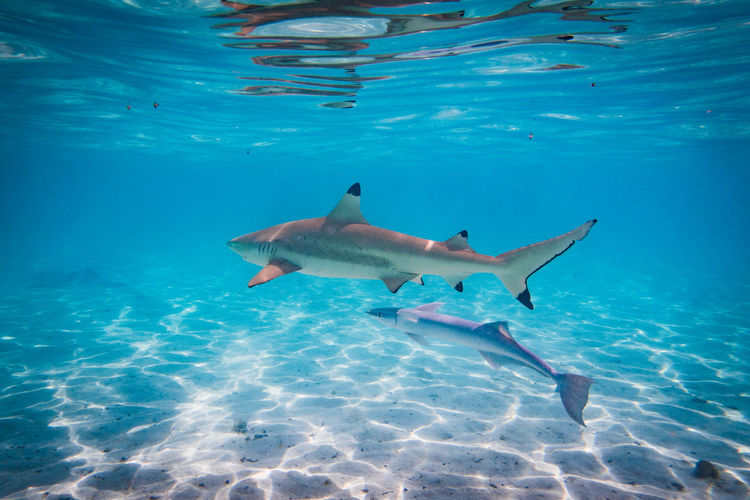 Sharks swimming in sea
