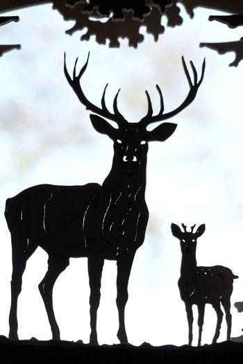 Animal Themes Antler Day Deer Indoors  Mammal Nature No People Reindeer Sky Stag Standing