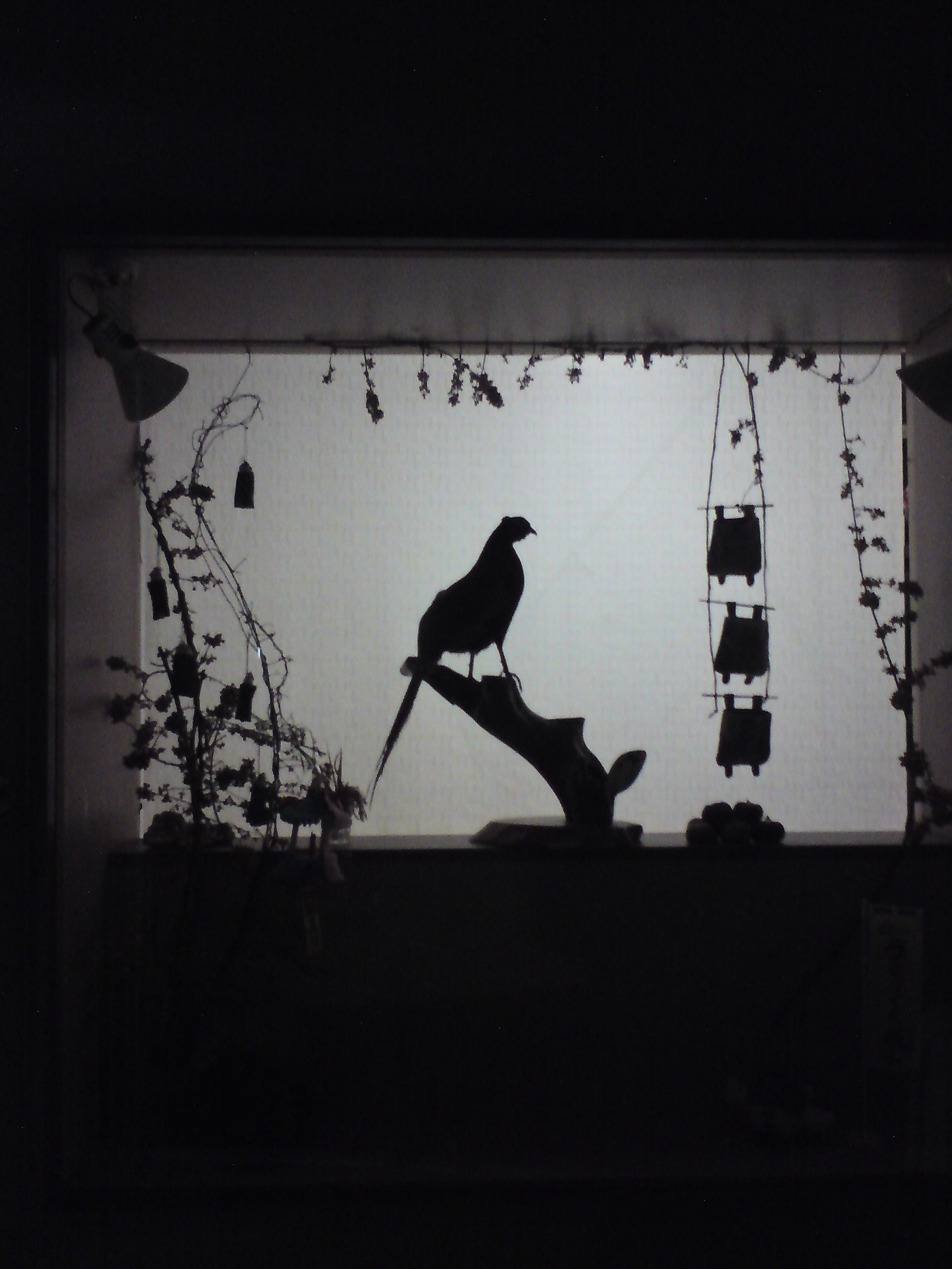 animal themes, low angle view, bird, animals in the wild, perching, wildlife, built structure, silhouette, architecture, indoors, hanging, cable, building exterior, one animal, no people, full length, window, day, power line