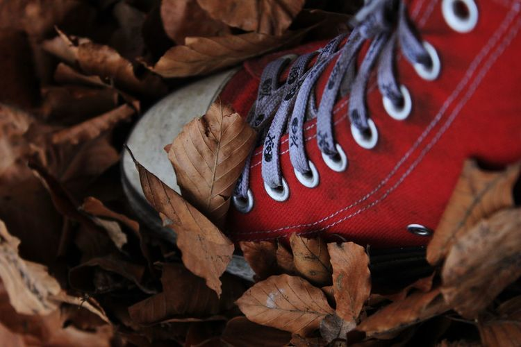 Detail Shot Of Shoes On Dry Leaves