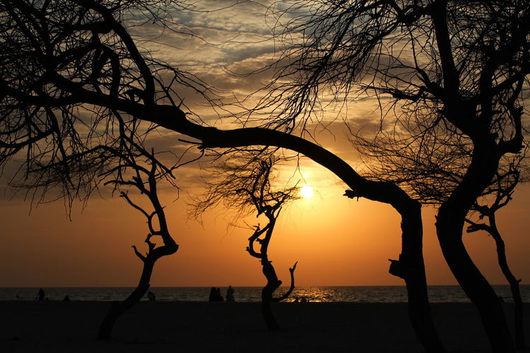 Entmoot Bare Trees Branches Beach Bahrain Nature Horizon Silhouettes Beauty In Nature Sky And Clouds Trees Sunset Silhouettes Horizon Over Water Scenics Colour Of Life Miles Away Golden Sunset