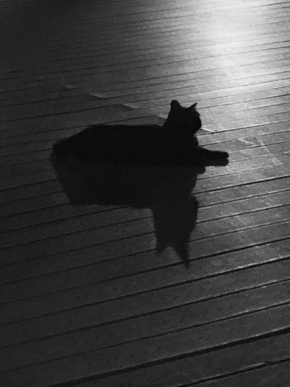 HIGH ANGLE VIEW OF CAT SHADOW ON A WOODEN FLOOR