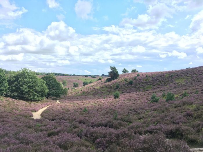 Landscape Nature Growth Sky Field No People Day Tranquility Agriculture Outdoors Beauty In Nature Scenics Tree Plant Heather