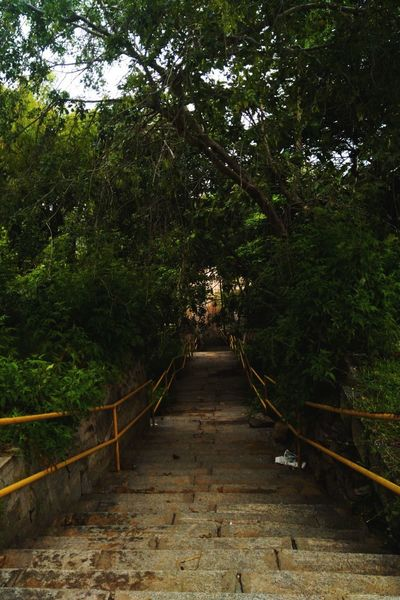Tree The Way Forward Outdoors Nature Beauty In Nature Growth Tranquility Day No People Footbridge Sky Indiaclicks Travel Destinations Streetsofindia👣 India_ig Moodygrams EyeEm Selects Indianphotography Indianphotographer India_gram Indiaincredible Bangaloredairies Scenics Outdoor Interior