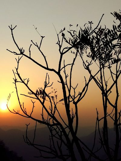 sometimes all you need is a beautiful sunset in mountains..Tree Mountains Nature Sunset Sunshine Outdoors Sharp Woods Gold Photography