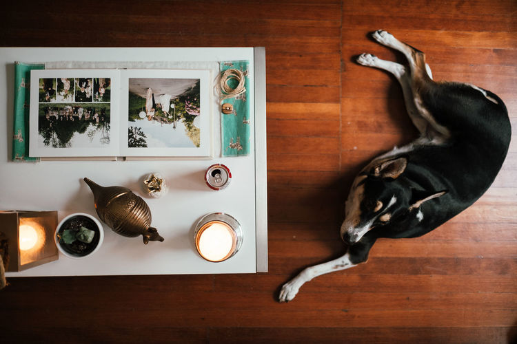 Artistic Coffee Table Desi Design Directly Above Dog Floor Indoors  Table Wood