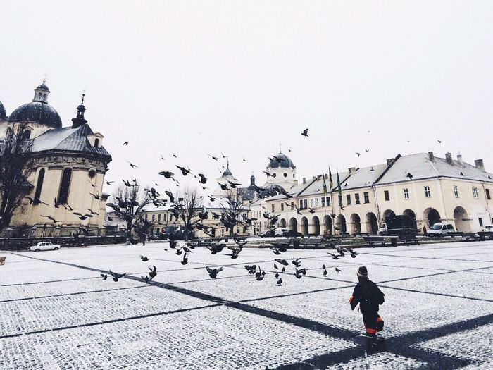 Child walking on street against birds and buildings on sunny day