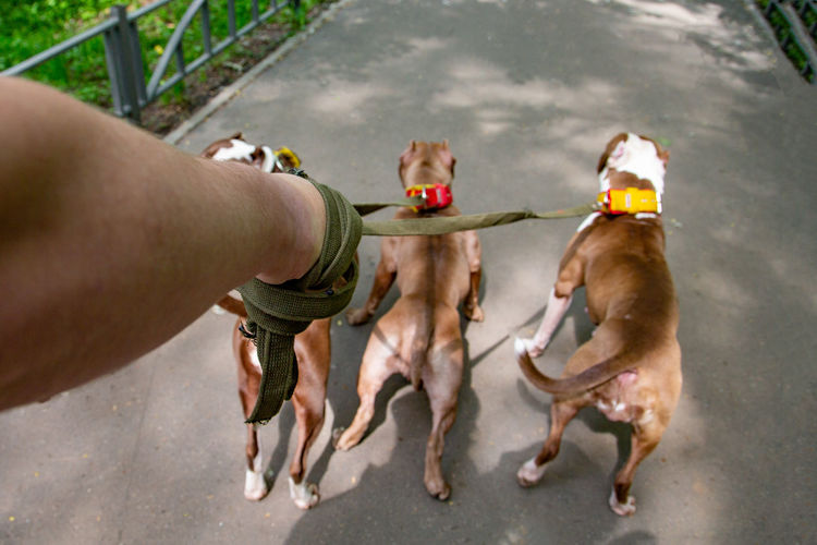 High angle view of dogs on hand