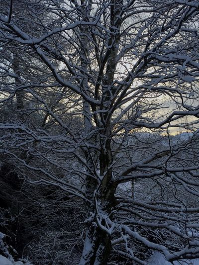 The Snowy tree of Helm Crag The Lake District  Helm Crag Natrual  Snow Tree Beautiful Nature