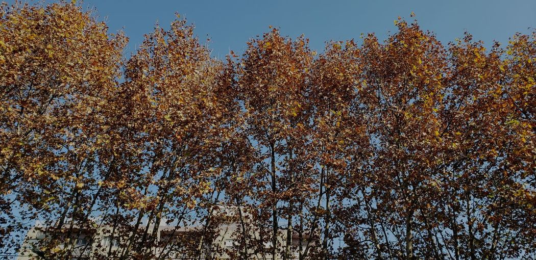 cold autumn Pixelated Backgrounds Full Frame Tree Sky Close-up