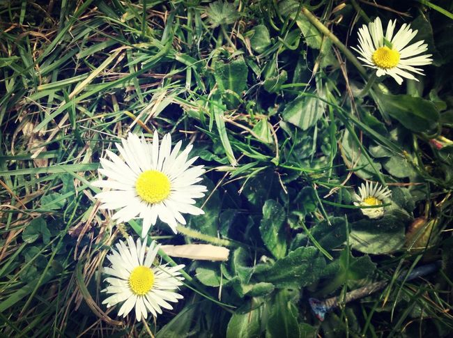 Taking Photos Photo Nature Flower