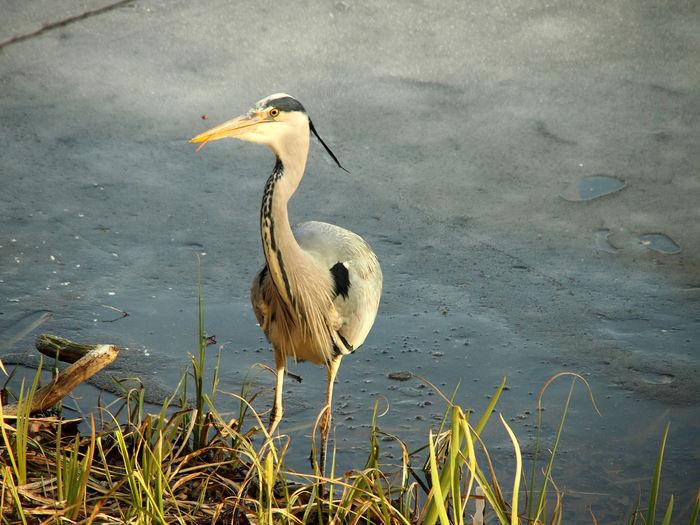 View of bird perching on lakeshore