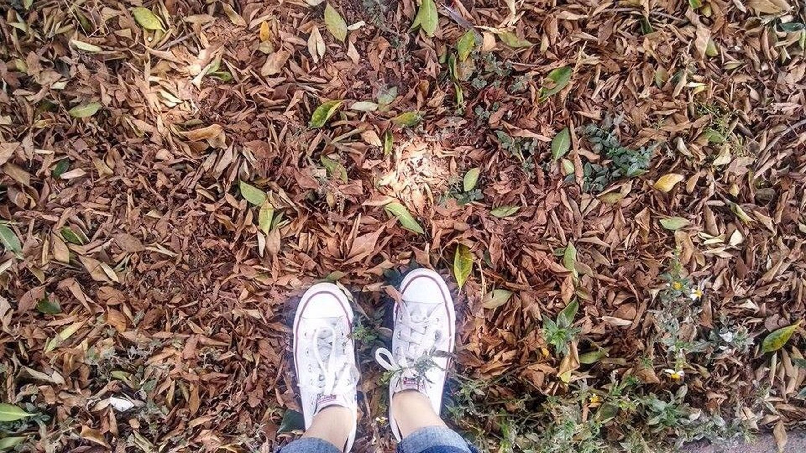 low section, person, shoe, grass, standing, field, high angle view, personal perspective, footwear, lifestyles, grassy, human foot, leisure activity, dry, jeans, day, unrecognizable person