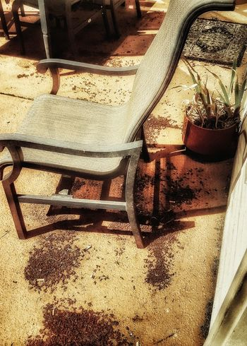Chair Patio Chair Patio Outside Outdoors House Yard Backyard Back Yard Table Table And Chairs On The Patio Garden Photography Back Of House Side Of House Lawn Chair Table And Chair Outdoor My Point Of View Potted Plant Floor Patio Furniture Furniture Outdoor Furniture Still Life