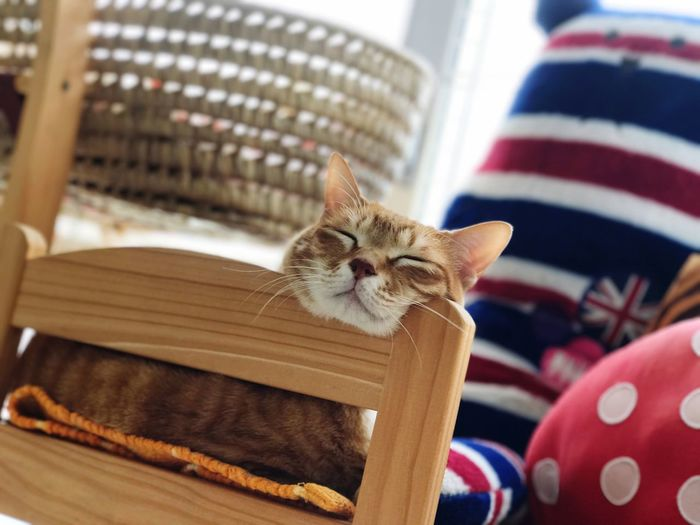 Enjoy relaxation😽😽 One Animal Animal Themes Cat♡ Cat Cat Lovers Cats Of EyeEm Cat Photography