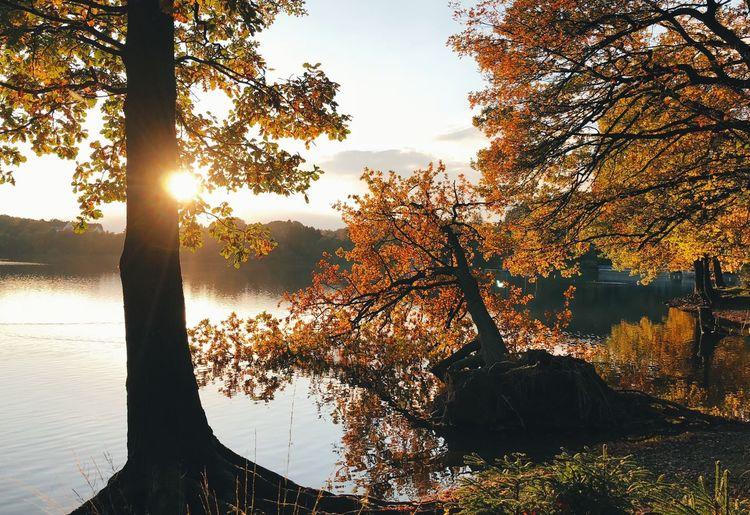 •autumn• Tree