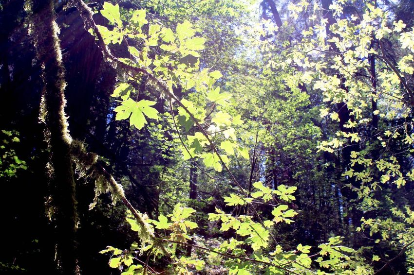 Getting Lost Plant Tree Growth Nature Beauty In Nature Sunlight No People Leaf Outdoors Green Color Forest