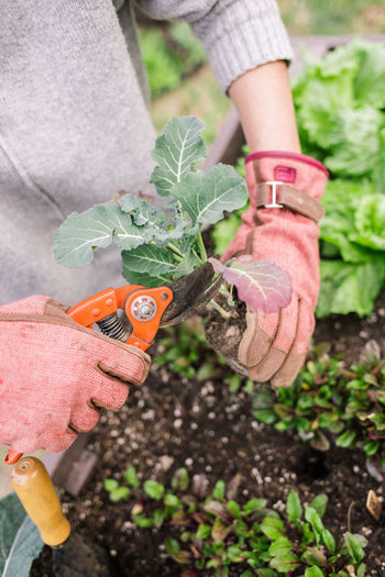 Midsection of person holding plant in garden