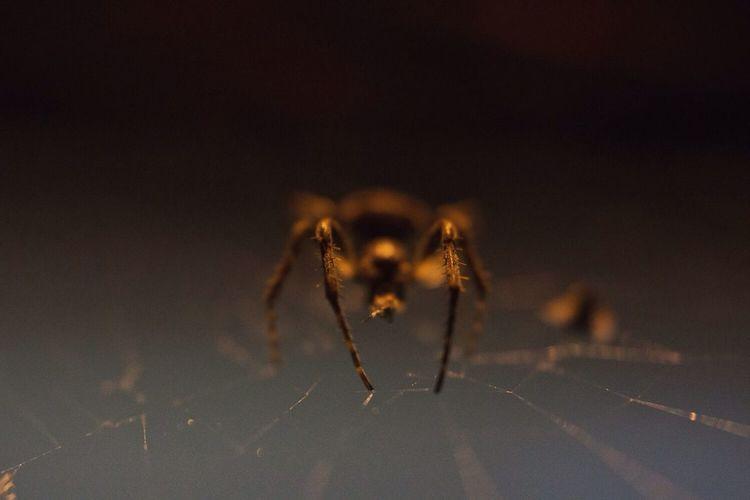 Spidert another
