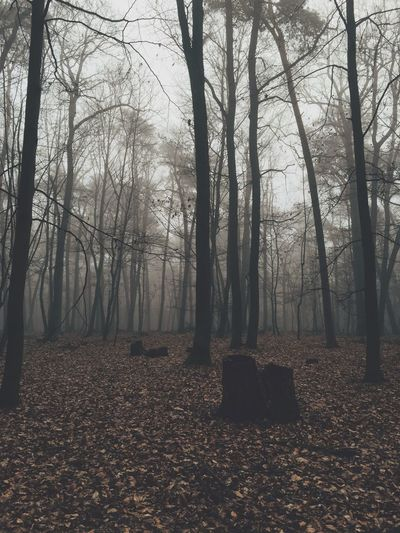 EyeEm Best Shots VSCO Fog Foggy Morning Forest Wood Iphoneonly Poland How's The Weather Today? IPSNatural IPS2015Fall