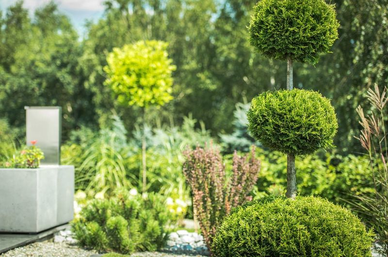 Trees And Plants Growing In Garden During Sunny Day