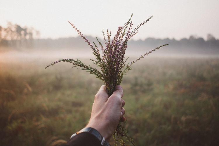 Cropped Image Of Hand Holding Plant Against Field During Foggy Weather