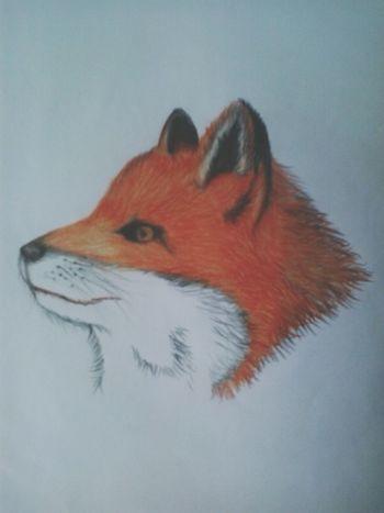 Drawings Draw Raposa Fanart