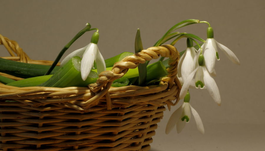 White flowers in basket against wall