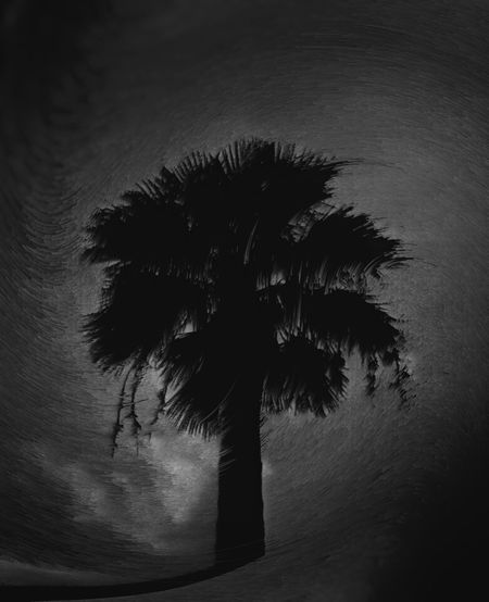 Silhouette palm tree against sky at night