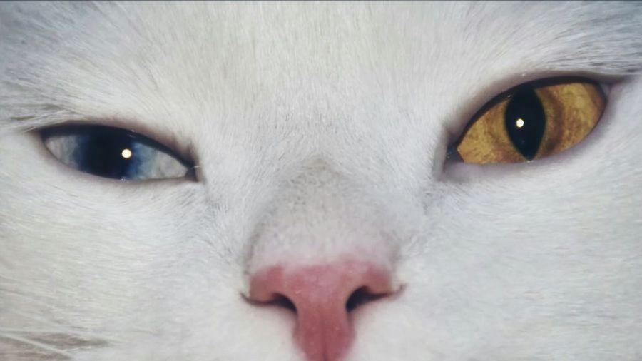 Hanging Out Hello World Tabuk Hi! Cat♡ لقطة Relaxing