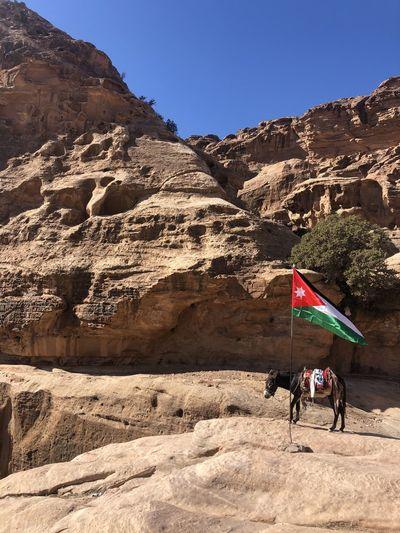 Donkey with jordanian flag in stone city petra