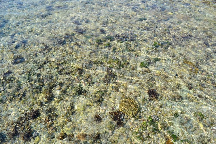 Beach Taking Photos Creatures Of The Sea Travel Destinations Under Water Tourism Check This Out Tranquility Clear Water Day Nature Batu Payung Beauty In Nature INDONESIA Lombok Must Visit Outdoors Terrace Enjoying Life Creatures
