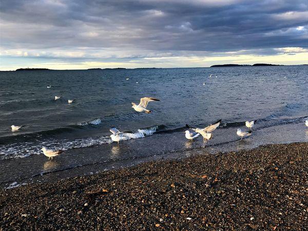 Nature Beach Flockofbirds Sea Waves Nature Ocean The Great Outdoors - 2017 EyeEm Awards
