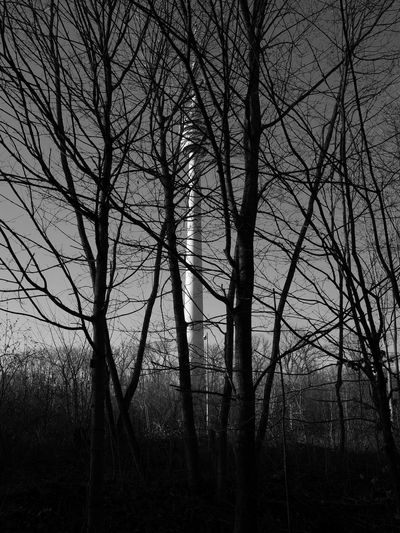 Silhouette bare trees in forest against sky