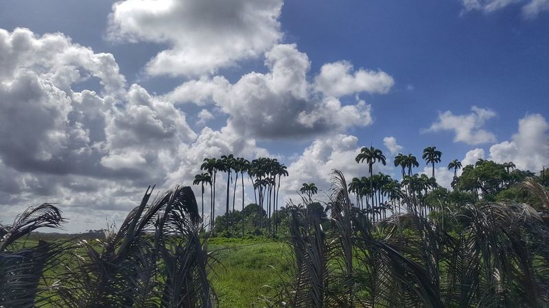 Cloud - Sky Sky Outdoors Day NatureTrees Tranquility Scenics Landscape No People Beauty In Nature Tranquil Scene Coconut Trees Palm Trees Greenry