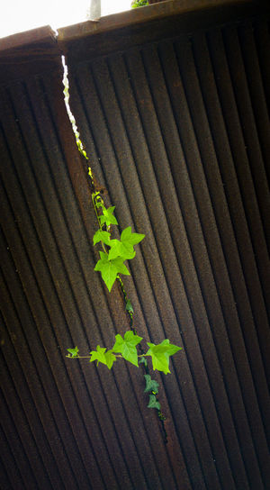 High angle view of plant growing on metal structure