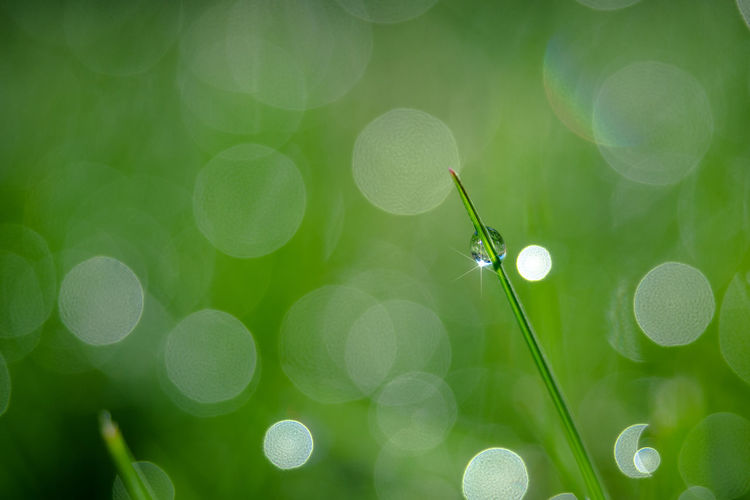 Green Beauty In Nature Bokeh Close-up Dew Drop Freshness Grass Green Color Growth Lens Flare Nature No People Outdoors Plant Purity Selective Focus Water Waterdrop Wet