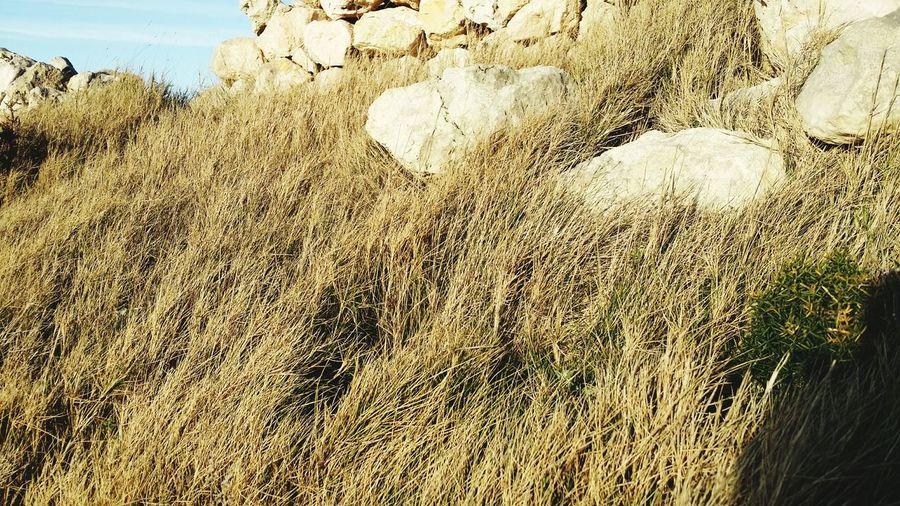 Mellieha Drygrass Malta
