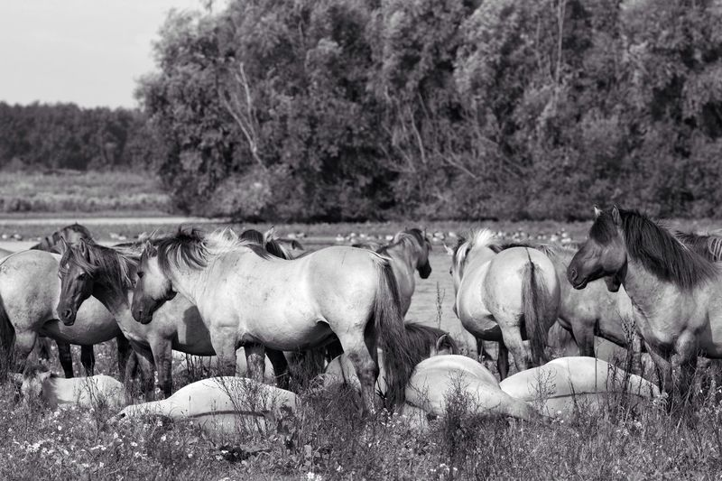 Horses Relaxing On Grassy Field