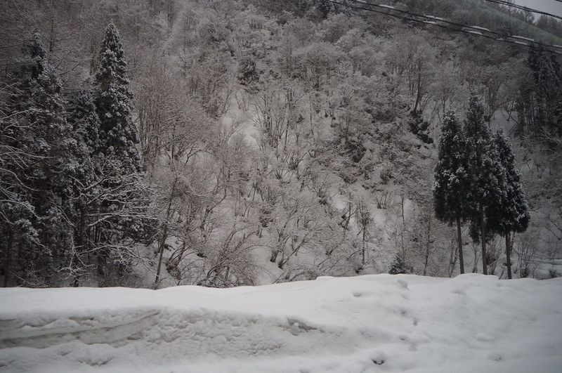 Close-up of snow covered landscape