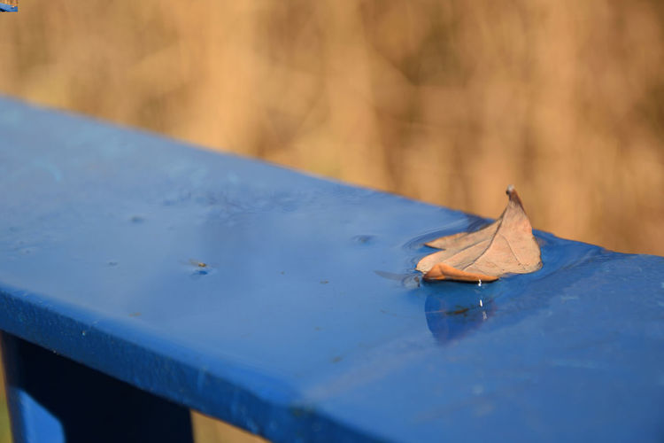 Leaf in water on the handrail in autumn season Dry Leaf Plant Part Water No People Blue Selective Focus Handrail  Close-up Autumn Day Nature Falling Vulnerability  Fragility Change Outdoors Metal Material Beauty In Nature Focus On Foreground Cold Temperature Dried Leaves EyeEmNewHere