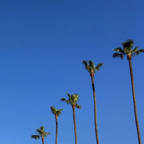 Sommergefühle Palm Tree Blue Clear Sky Low Angle View EyeEmNewHere EyeEm Best Shots