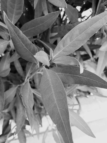 Leaf Plant Nature Growth No People Close-up Outdoors Beauty In Nature Day